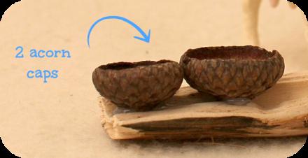 acorncaps_details